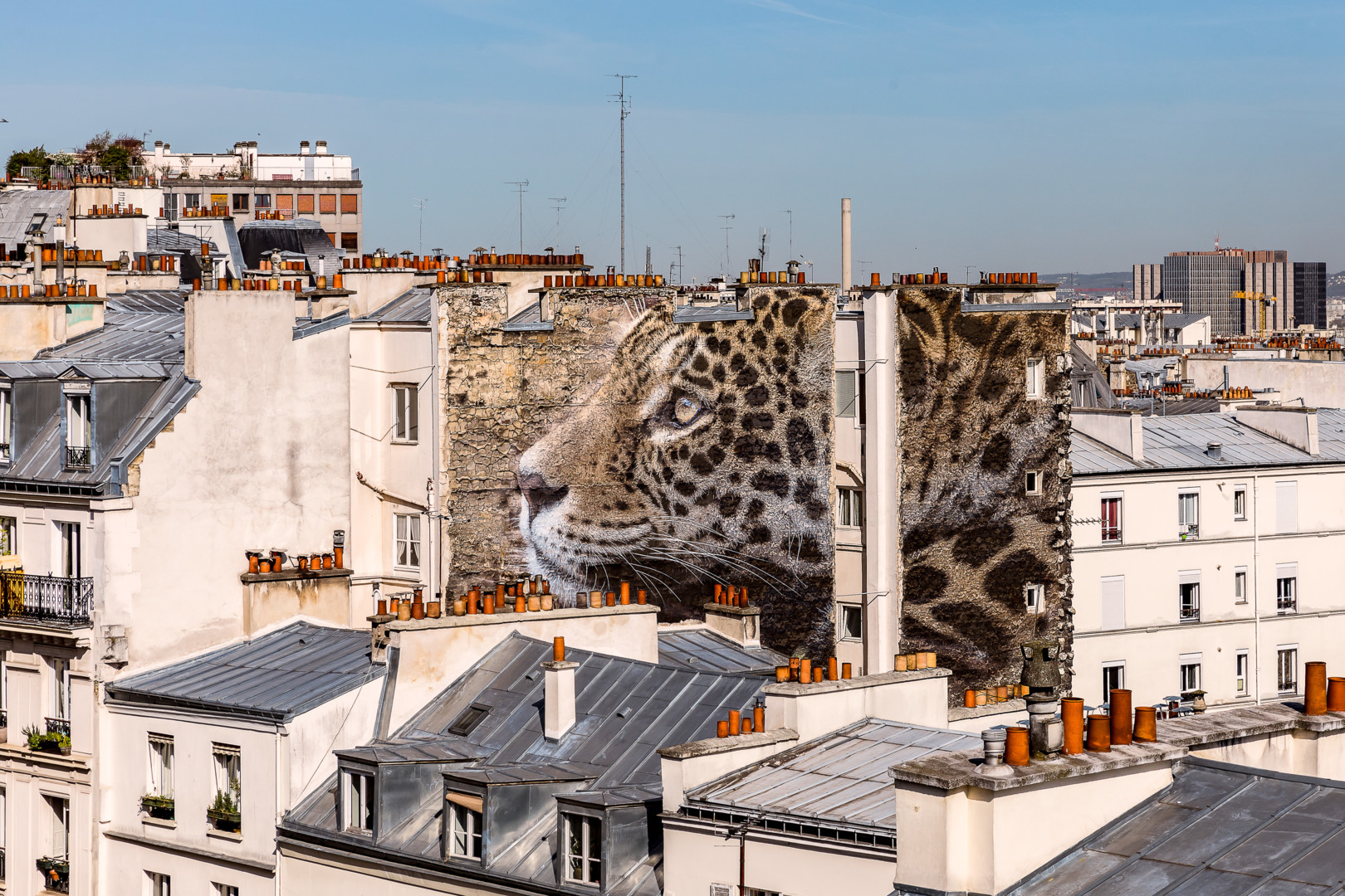 Maxl - Un léopard à Montmartre