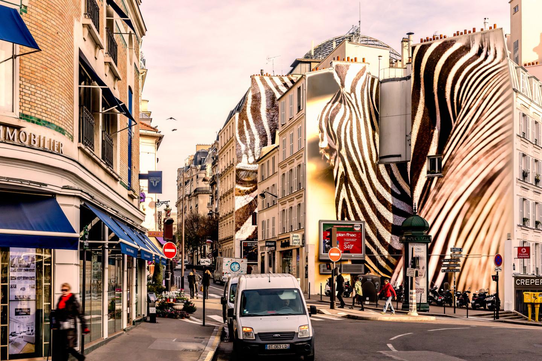 Maxl - zebra.jpg